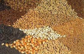 Какое оборудование для работы с семенным материалом выберут аграрии?