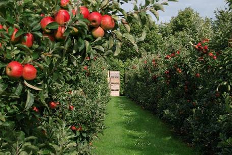 В Курской области будет 1000 га садов