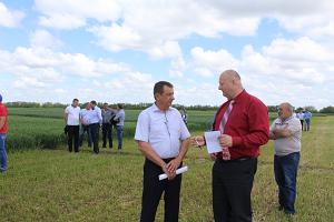 Какие сорта пшеницы выращивают в ставропольском крае?