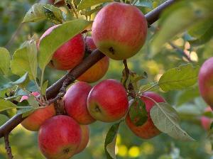 Кредиты на интенсивные сады в Белгородской области