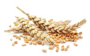 Новый семенной завод начал прием семян