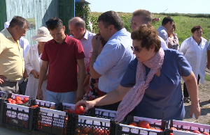 Астраханские селекционеры идут к фермерам