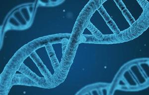 Переписать геном растения
