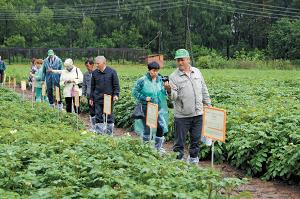 Селекция и семеноводство картофеля – задача общая