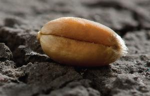 Не засоряйте землю слабыми семенами