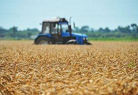 Урожайность зерновых в Ингушетии