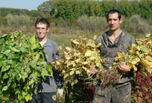 Студенты Томского ГУ изучают овощеводство