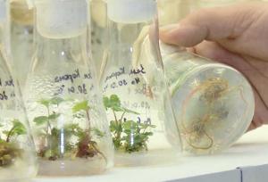 Объединить агропредприятия и лабораторию