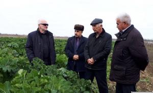 В Дагестане оценили перспективу кормовых культур