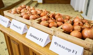 Индустрия овощеводства
