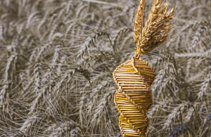 Перемены в индустрии селекции пшеницы