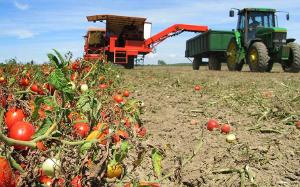 Семена – важная забота