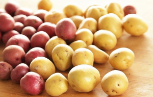 Российский семенной картофель — для Сербии