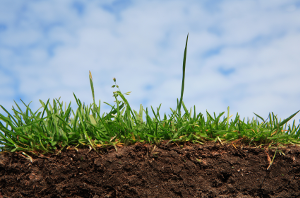 Цифровая модель почв