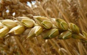 В Башкортостане будет первый семеноводческий кооператив