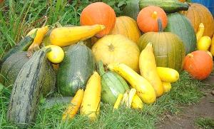 Генресурсы для селекции кабачка и тыквы
