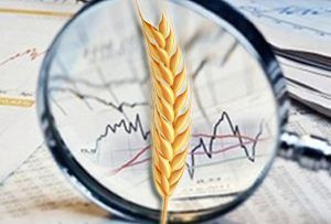 Генпрокуратуру не устроило качество зерна