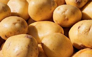Семеноводство картофеля в горных условиях