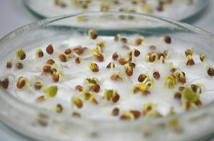 В Самарской области проверяют качество семян