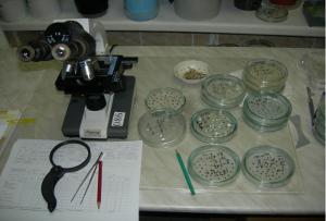 Где производят качественные семена?