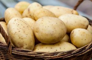 В Брянске «вычислили» зараженный импортный картофель