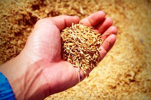 «Селекция и семеноводство — залог роста урожайности и рентабельности»