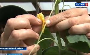 «Ленивые» томаты и суперурожайные огурцы