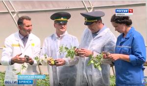 Центр семеноводства картофеля на Брянщине