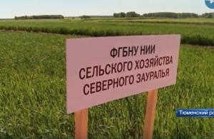 Тюменские сорта зерновых