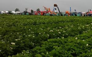 Всероссийский день картофельного поля