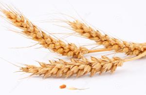 Управление пшеницей