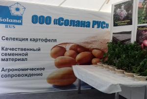 Семенной картофель по-ленинградски