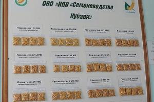 Семена санкций