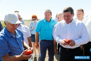 Волгоградские помидоры станут транспортабельнее