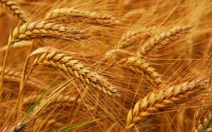 Ключ к 7-кратному увеличению урожайности