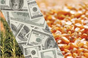 Экспорт семян кукурузы и подсолнечника