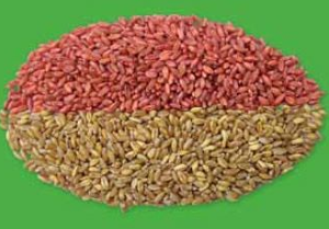 Рынок протравителей зерновых