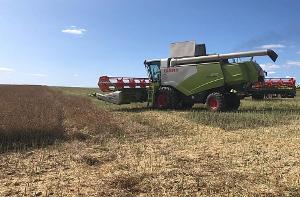 На Кубани собрали рекордный урожай зерна