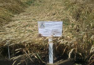 Зерновой союз против