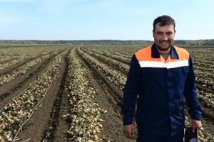 Безвирусный картофель иркутского фермера
