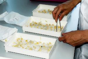 Принцип сохранения семян