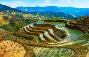 Китай готовит прорыв в селекции растений