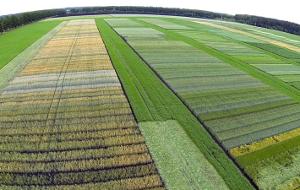 Репродукция семян ниже — качество зерна хуже
