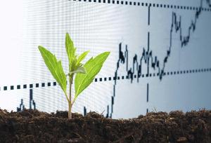 Развитие селекции и семеноводства в России