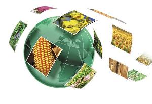 У производителей и поставщиков семян задачи разные