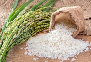 Как повысить экспорт риса?