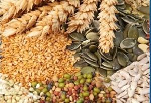 В Алтайском крае подготовили 47 тыс. т семян