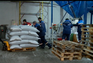 Тюменский рапс вывозят в Монголию и Китай