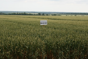 В Ростовской области обсудили закон «О семеноводстве»