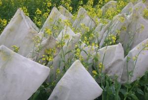 Капустные сибирской закваски